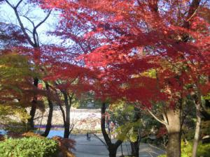 名古屋城7紅葉