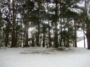 千早城二の丸熊野天然杉