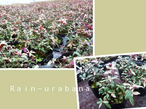 温室って、栽培って、凄いなぁ~