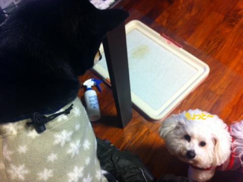 指定席を取られた犬。 (1)