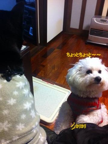 指定席を取られた犬。 (2)
