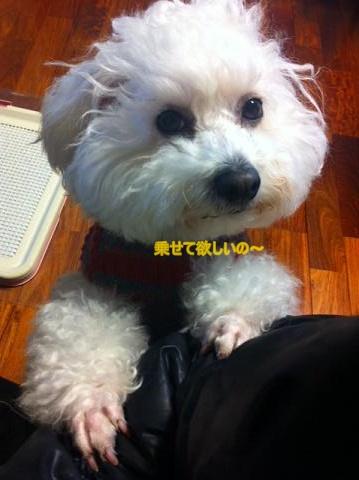 指定席を取られた犬。 (3)