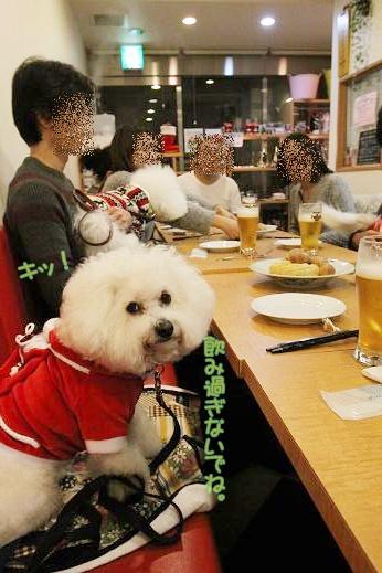 ワクワクの犬連れクリスマス会 (1)