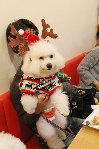 ワクワクの犬連れクリスマス会 (2)