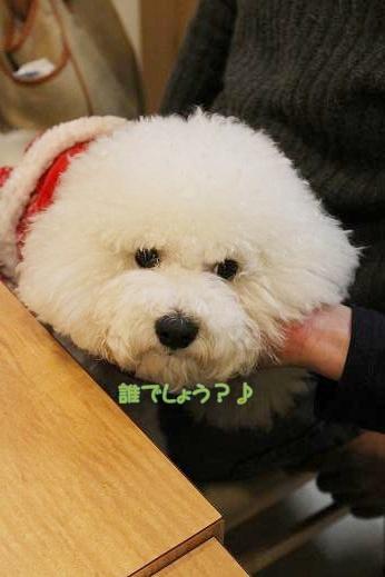ワクワクの犬連れクリスマス会 (7)