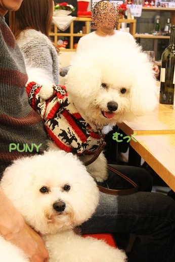 ワクワクの犬連れクリスマス会 (8)