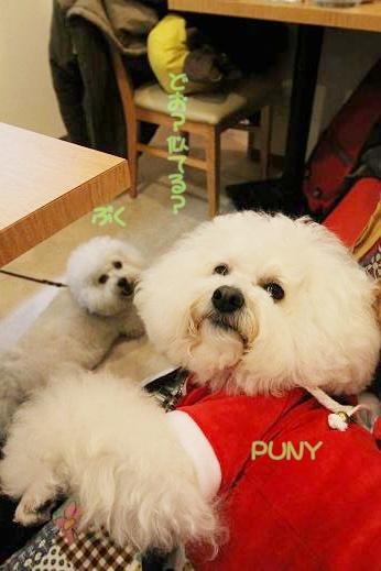 ワクワクの犬連れクリスマス会 (9)