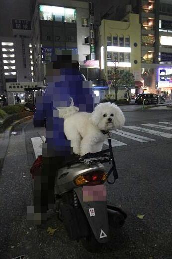 電車乗ったりバイク乗ったり (3)