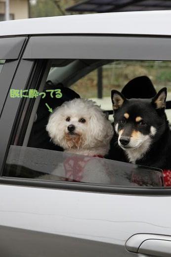 SLの試し運転を見に行ったよ! (1)