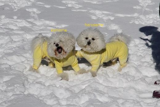 雪遊び@草津 (4)