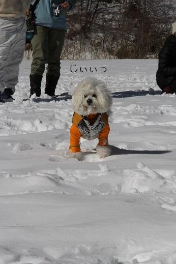 一歩一歩・・・(雪遊び) (2)