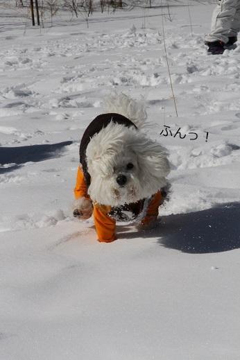 一歩一歩・・・(雪遊び) (3)