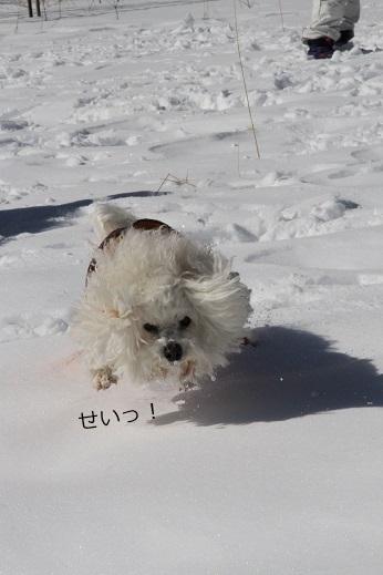 一歩一歩・・・(雪遊び) (4)