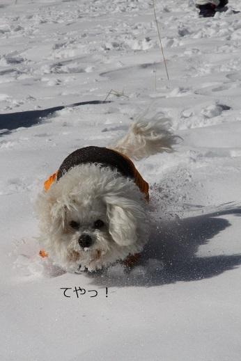 一歩一歩・・・(雪遊び) (5)