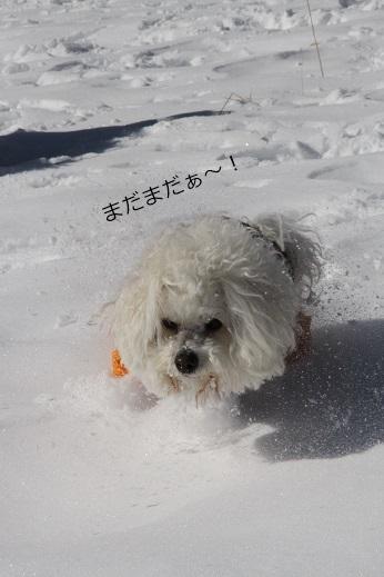 一歩一歩・・・(雪遊び) (6)