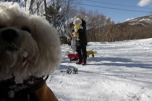 雪遊びの〆 (8)