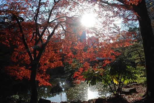 池のモミジはまだ紅葉していました