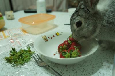 ラビィ苺3