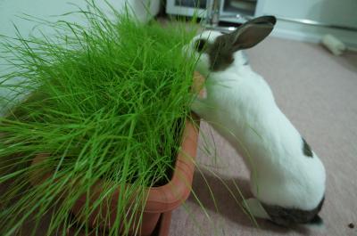 うさらび牧草4