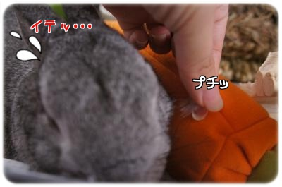 ラビィ毛3