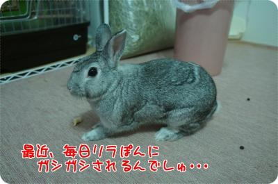 ラビィ抜け毛1