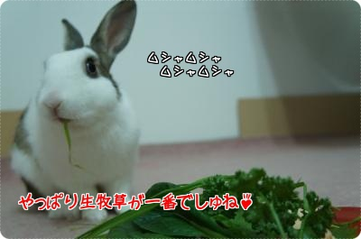 うさらびクリスマス6