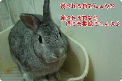 うさらび当選4