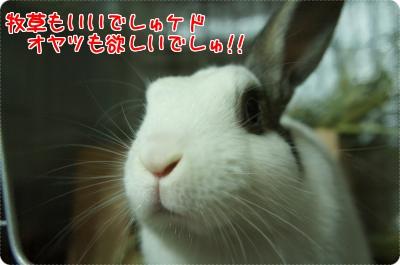 うさらび当選5
