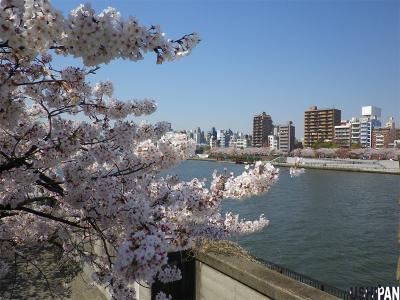 2012隅田公園桜5