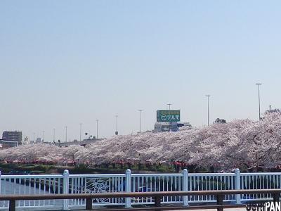 2012隅田公園桜4