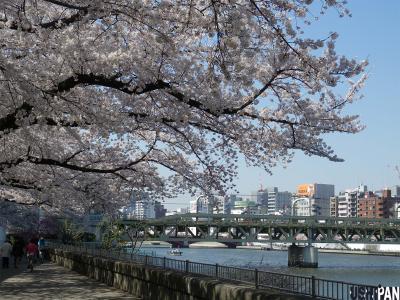 2012隅田公園桜3