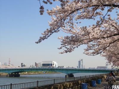 2012隅田公園桜2