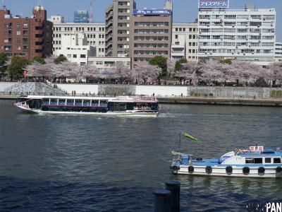 2012隅田公園桜1