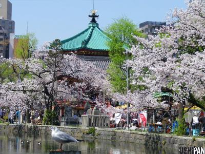 上野公園桜20123