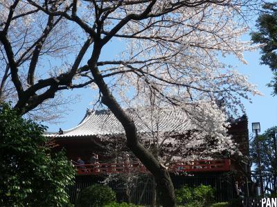 上野公園桜20122