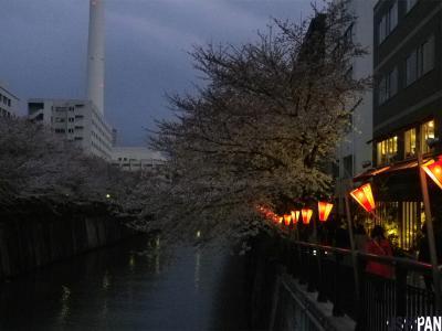 目黒川の桜20121