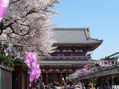浅草寺桜3