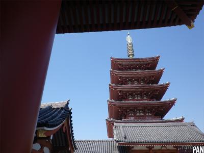 浅草寺桜2