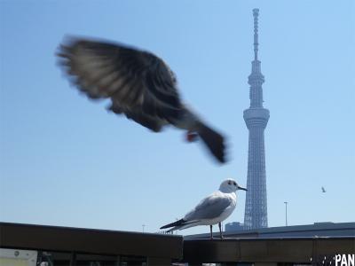 東京スカイツリーコラボ写真3