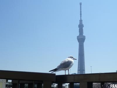 東京スカイツリーコラボ写真2