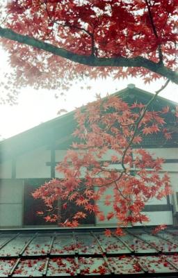 20141124-20141122Miyajimai_Summicron50L_ProfotoXL100_012.jpg