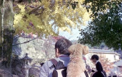 20141124-20141122Miyajimai_Summicron50L_ProfotoXL100_023.jpg