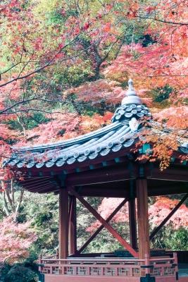 20141123-錦帯橋紅葉谷公園DP2Merrill35