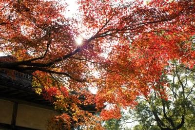 20141123-錦帯橋紅葉谷公園DP2Merrill12