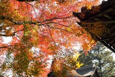 20141123-錦帯橋紅葉谷公園DP2Merrill13