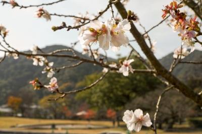 20141123-錦帯橋紅葉谷公園DP2Merrill26