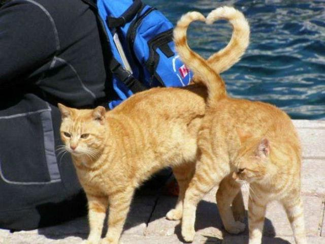 cat+hart_convert_20130303170926.jpg