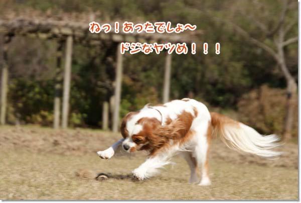 20121212_079.jpg