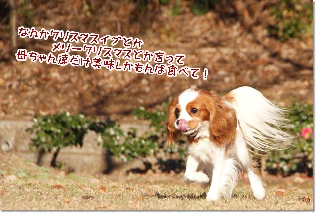 20121219_097.jpg