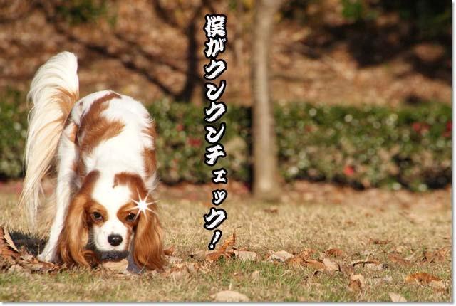 20121219_108.jpg
